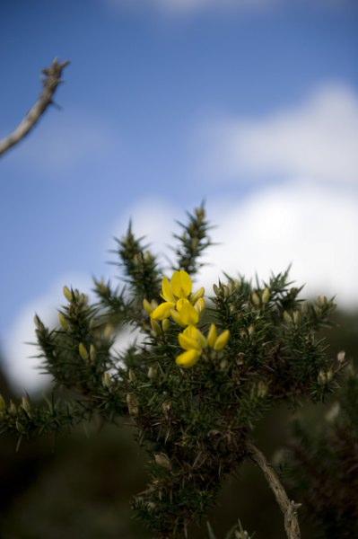 Flora_399x600
