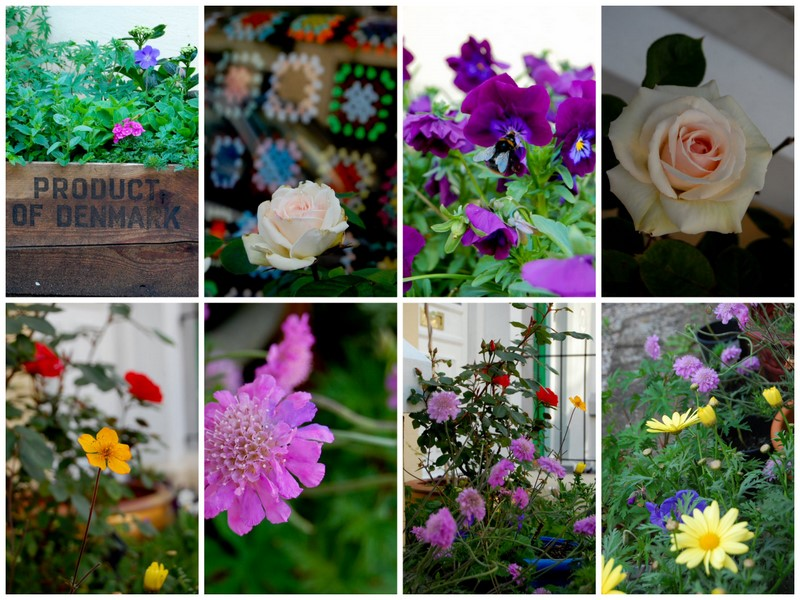 Flowers 19.52