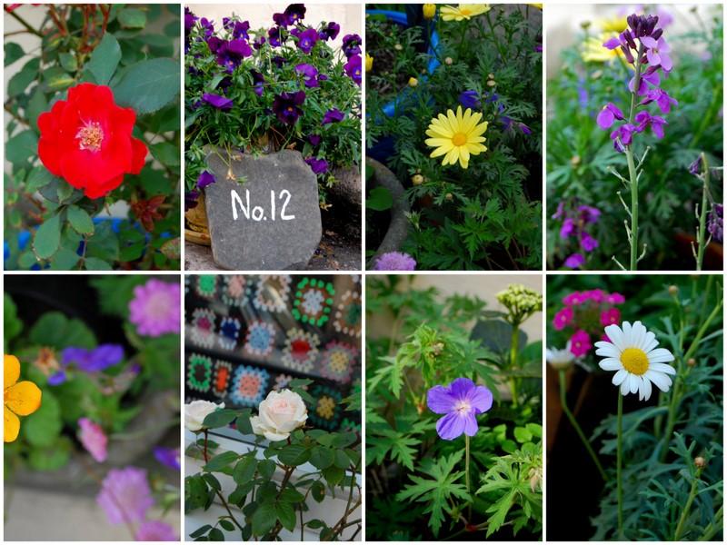 Flowers 19.53